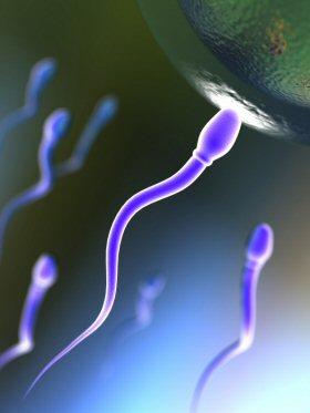 Sperm_egg_4is