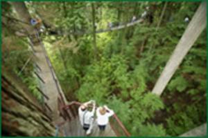 Treetop_overheadwide_2