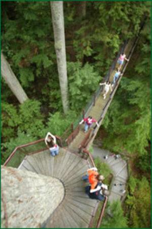 Treetop_vertical_2
